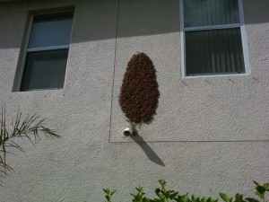 Bee_Swarm_on_Home